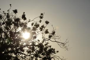 木の写真素材 [FYI04522518]