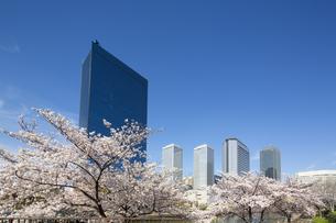 桜咲く春の大阪ビジネスパークの写真素材 [FYI04522577]