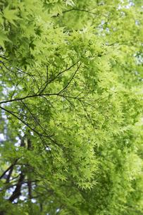 新緑の写真素材 [FYI04522659]