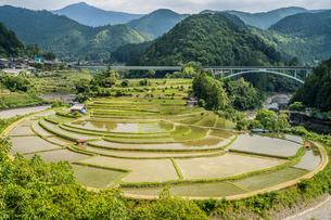 日本の棚田百選 和歌山県のあらぎ島の写真素材 [FYI04522664]