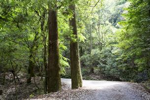 奈良春日山原始林の写真素材 [FYI04522709]