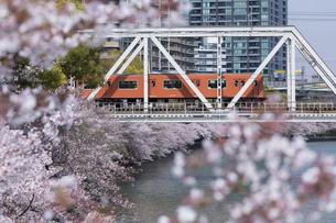 大川の桜並木と大阪環状線の写真素材 [FYI04522931]
