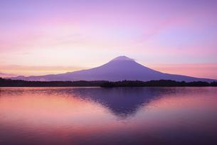 静岡県 田貫湖より朝焼けと富士の写真素材 [FYI04523339]