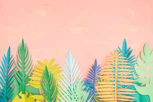 Paper tropical leaves on pink backgroundの写真素材 [FYI04523492]