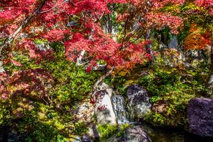 紅葉の中に小さな滝 けいはんな記念公園 秋 11月の写真素材 [FYI04523975]