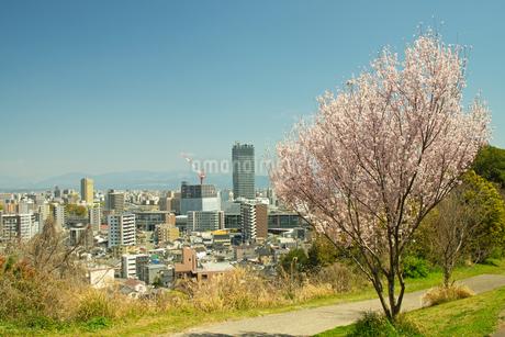 万日山緑地公園の桜の写真素材 [FYI04524110]