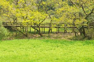 春の立田山の写真素材 [FYI04524114]