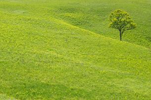 新緑の阿蘇の写真素材 [FYI04524230]