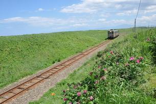 北海道、知床半島のハマナスと電車の写真素材 [FYI04524291]
