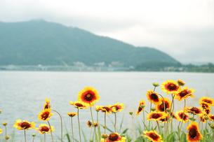夏の花と山の風景の写真素材 [FYI04524441]