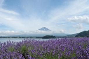 夏の河口湖と富士山とラベンダー風景の写真素材 [FYI04524454]