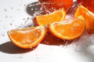 ミネオラオレンジと水飛沫の写真素材 [FYI04524614]