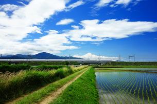 あぜ道と東海道新幹線の写真素材 [FYI04525088]