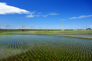 早苗と東海道新幹線の写真素材 [FYI04525090]