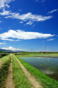 あぜ道と東海道新幹線の写真素材 [FYI04525091]