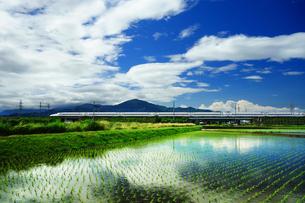 早苗と東海道新幹線の写真素材 [FYI04525101]