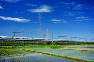 東海道新幹線と早苗の写真素材 [FYI04525106]