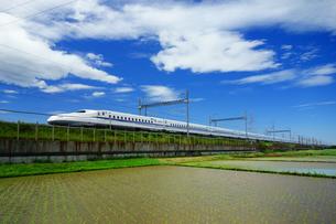 東海道新幹線と早苗の写真素材 [FYI04525120]