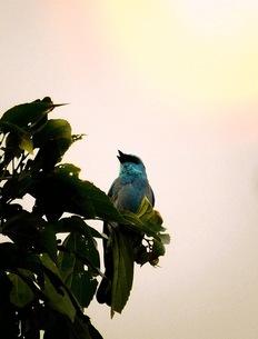 青い鳥2の写真素材 [FYI04525334]