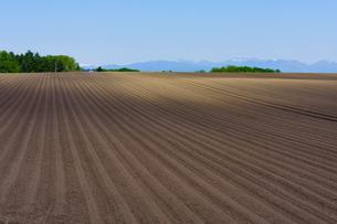 十勝の畑の写真素材 [FYI04525407]
