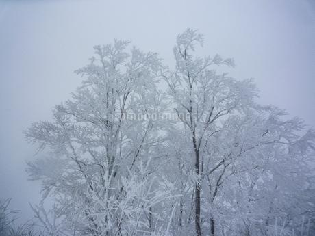 吹雪が吹くスキー場のゲレンデのイメージの写真素材 [FYI04525793]