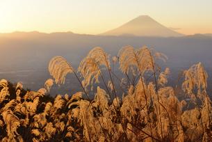 山梨県 朝陽に照るススキと富士山の写真素材 [FYI04526659]