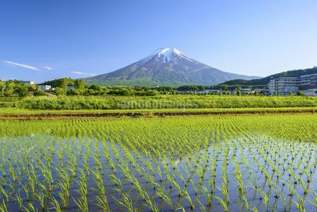 山梨県 水田に映る富士山の写真素材 [FYI04526668]