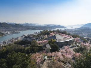 広島県 千光寺公園の桜の写真素材 [FYI04527428]