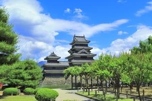 新緑の松本城の写真素材 [FYI04528084]
