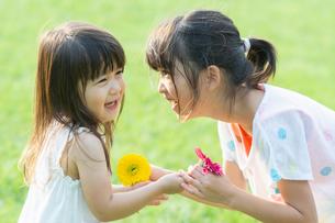 花を渡す姉妹の写真素材 [FYI04528182]
