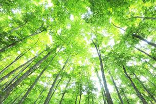 ブナの森の写真素材 [FYI04528386]