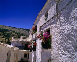 モロッコ ショウエンの白い家の写真素材 [FYI04528461]