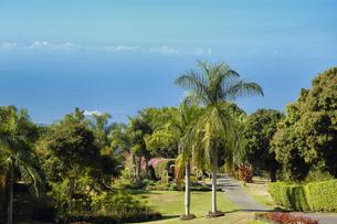 ハワイ州 ハワイ島 農園のヤシの木の写真素材 [FYI04528522]