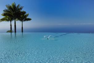 ハワイ州 ハワイ島 水辺の木と青空の写真素材 [FYI04528523]