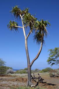 ハワイ州 ハワイ島 プウコホラヘイアウ国立歴史公園の写真素材 [FYI04528526]