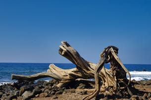 ハワイ州 ハワイ島 プウコホラヘイアウ国立歴史公園の写真素材 [FYI04528527]