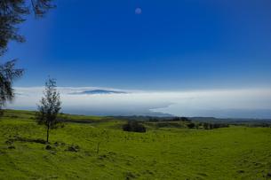 ハワイ州 ハワイ島 コハラマウンテンロードの写真素材 [FYI04528528]