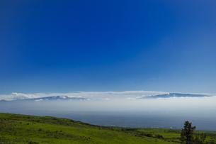 ハワイ州 ハワイ島 コハラマウンテンロードの写真素材 [FYI04528529]