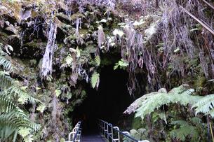 ハワイ州 ハワイ島 ハワイ火山国立公園のサーストンラバーチューブの写真素材 [FYI04528533]