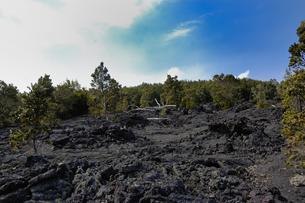 ハワイ州 ハワイ島 ハワイ火山国立公園のチェーンオブクレーターズロードの写真素材 [FYI04528534]
