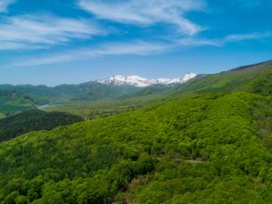 新緑の妙高山南山麓から笹ヶ峰方面 遥か天狗原山と金山を望む 5月の写真素材 [FYI04528749]