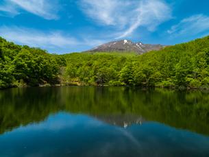 仙人池と新緑の妙高山南山麓 5月の写真素材 [FYI04528756]