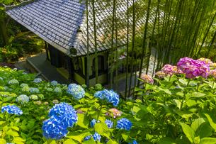 長谷寺の経堂とあじさいの写真素材 [FYI04528942]