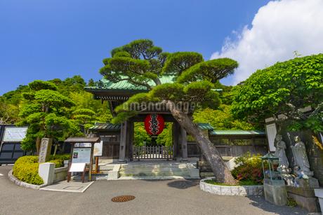 長谷寺の山門の写真素材 [FYI04528954]