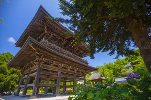 建長寺の三門とあじさいの写真素材 [FYI04528964]