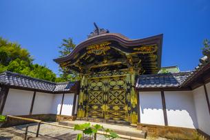 建長寺の唐門の写真素材 [FYI04529087]