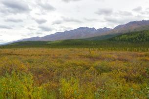 アラスカ、雪解け後の湿地帯の写真素材 [FYI04529093]