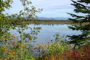 アラスカの原生林に囲まれた湖の写真素材 [FYI04529094]