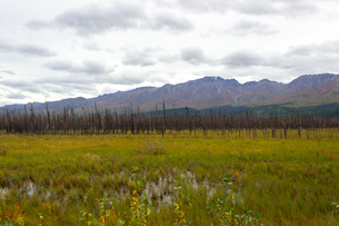 アラスカ、雪解け後の湿地帯の写真素材 [FYI04529096]