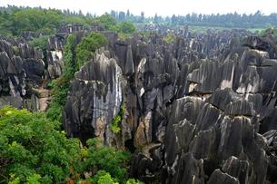 中国旅行・カルスト地形の石林の写真素材 [FYI04529103]